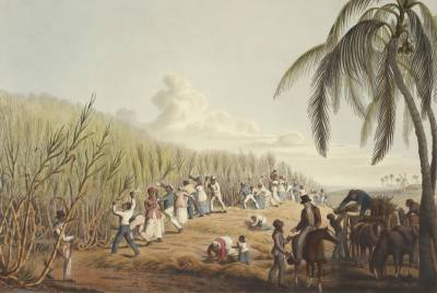 Painting of slaves cutting sugar cane, 1823