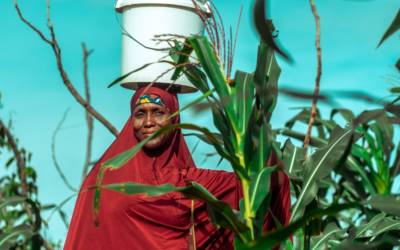 Nigerian woman standing by crops