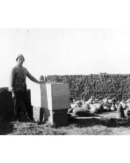 Team member Mr Frost packing pottery at the end of the Lahun/Harageh season in 1913-1914.