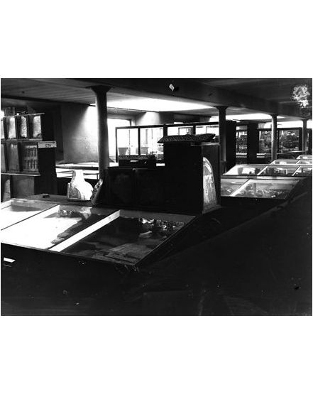 Display cases in the museum. Photo from the Petrie Museum archive.