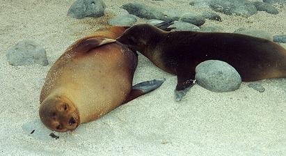 Seal suck