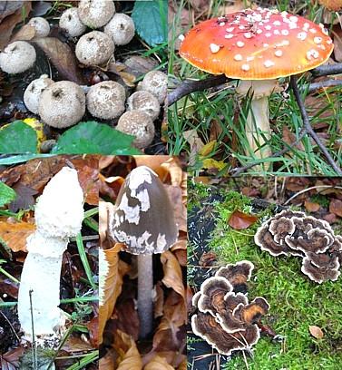 http://www.ucl.ac.uk/Pharmacology/dc-bits/fungi-pics1-04m.jpg