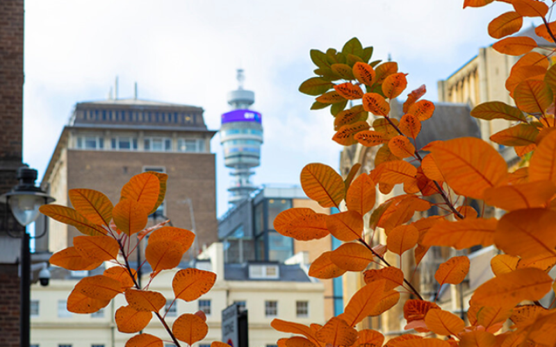 Lead image of Bloomsbury and BT Tower