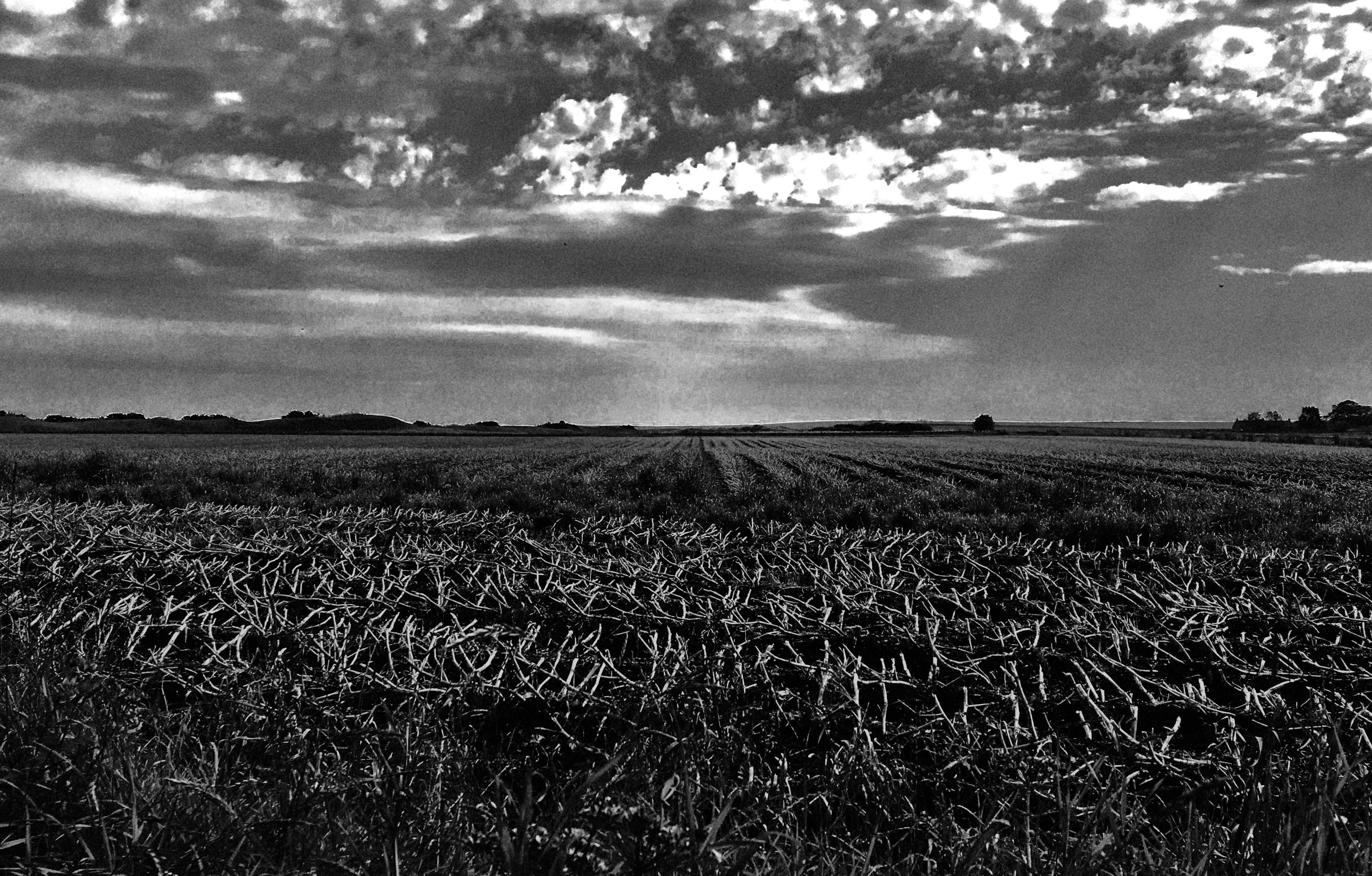 Ploughed field near Fife