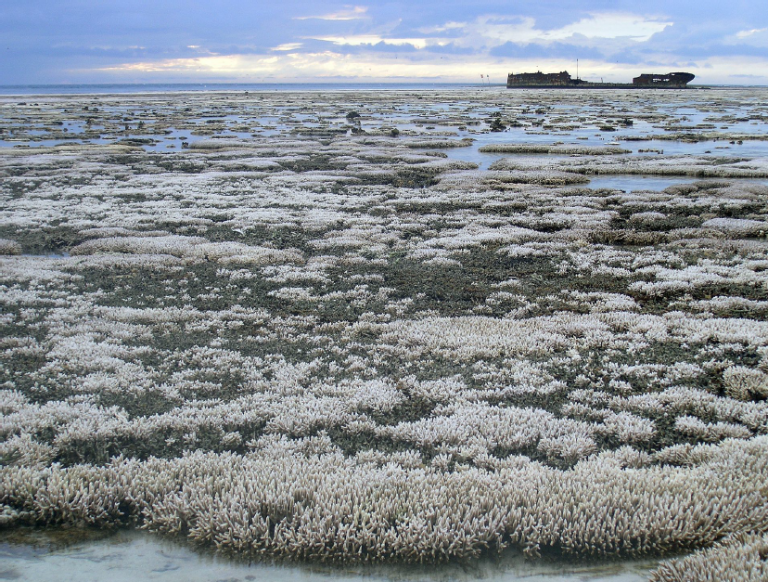 A major coral bleaching event took place on this part of the Great Barrier Reef in Australia