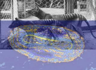 Smallpox Thylacine