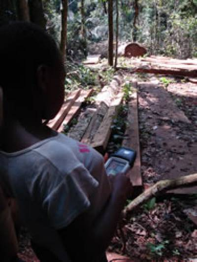 Baka youth maps illegally felled trees, Cameroon 2007