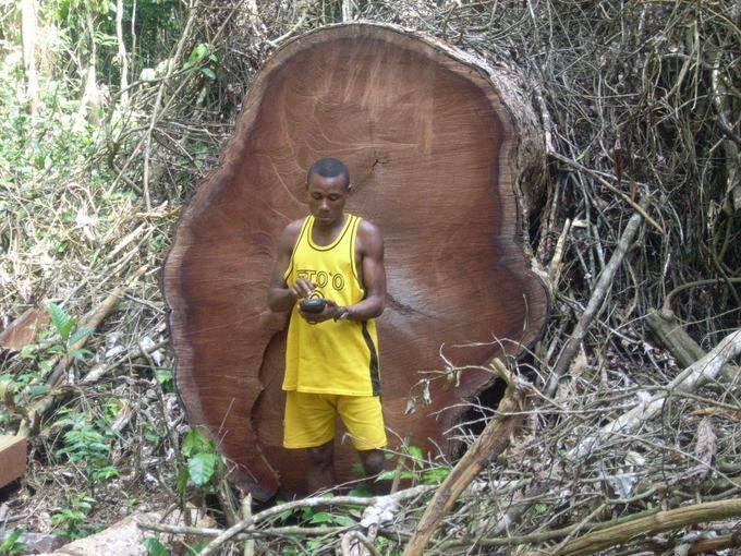 Baka map illegal logs large