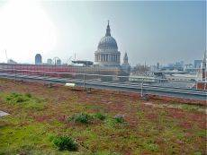 London green roof