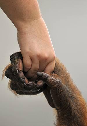 illu_hominoid-handshake_jutta-ho