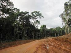 Mbalam Road