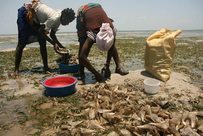 Perlemoen fishers