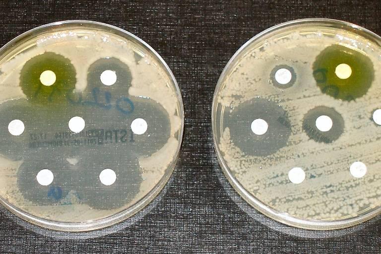 Antibiotic_sensitvity_and_resistance.jpg