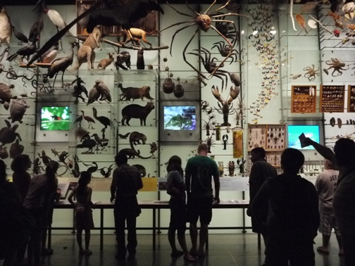 Hall of Biodiversity, American Museum of Natural History, New York 2011