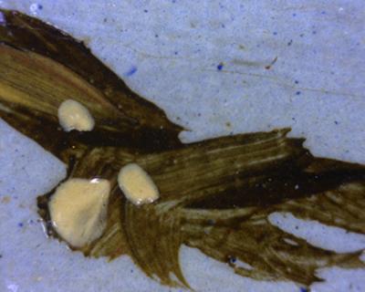 Micrograph of a Bird