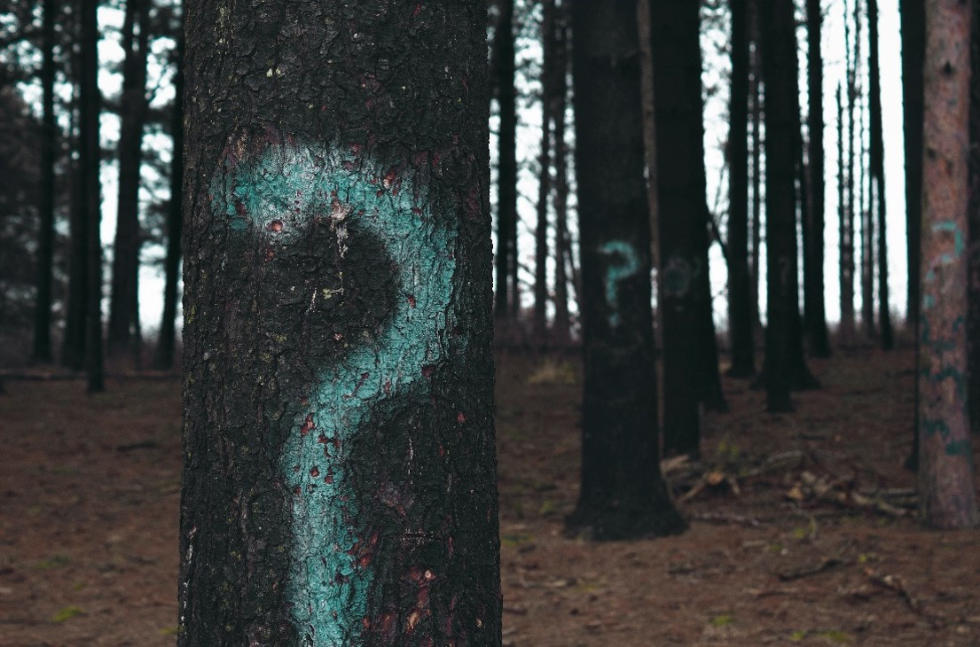 Trees Question Marks