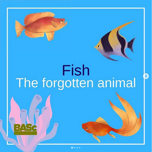 Fish: The Forgotten Animal