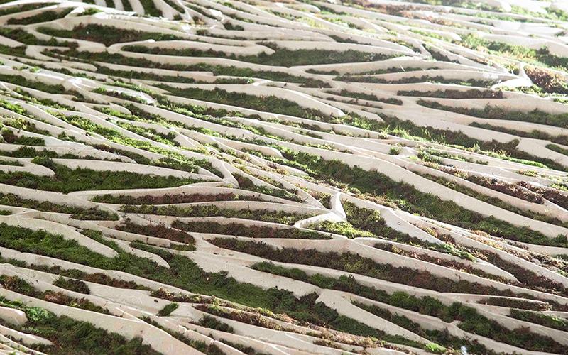 St Annes wall with moss for the 'Le Fabrique du Vivant' exhibition at the Centre Pompidou - detail. Photo Credit: Sarah Lever