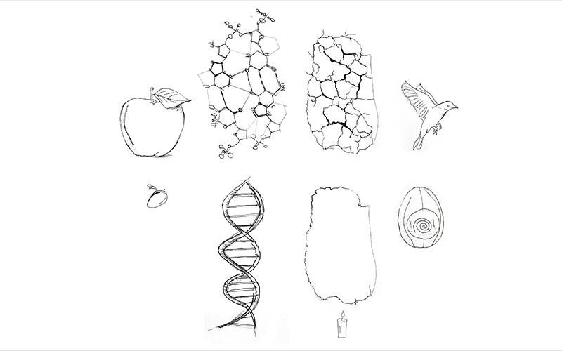 Origins of Urban Structure, by Besnik Murati. A group of sketches, including an apple, a bird and a DNA strand.