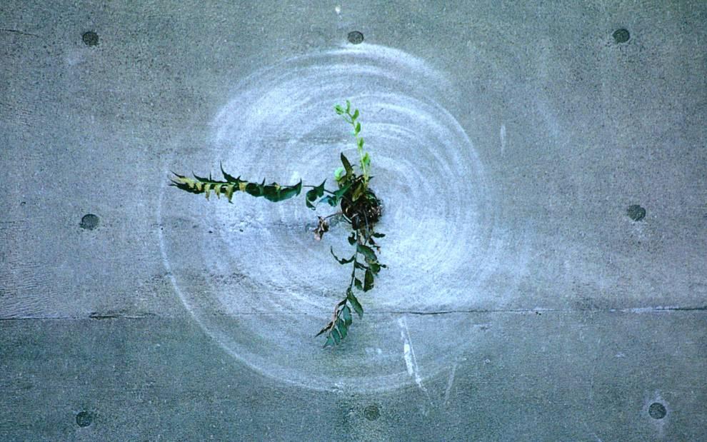 Genpei Akasegawa, 'Plant Wipers' series