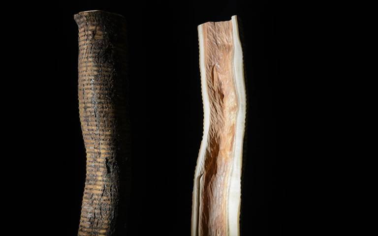 """Plum tree log experimentation"" (Photo taken by Felix Graf)."