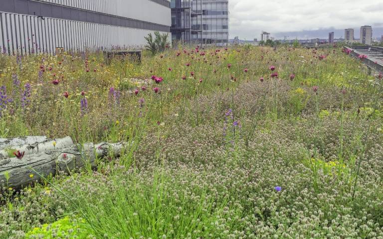 Extensive green roof at 1 More London Riverside, by Dusty Gedge