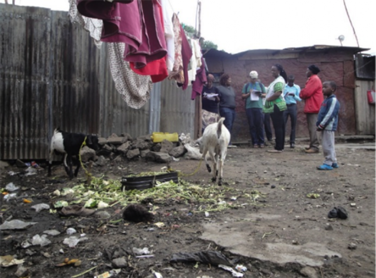 Zoonoses research in Nairobi, Kenya, November 2013