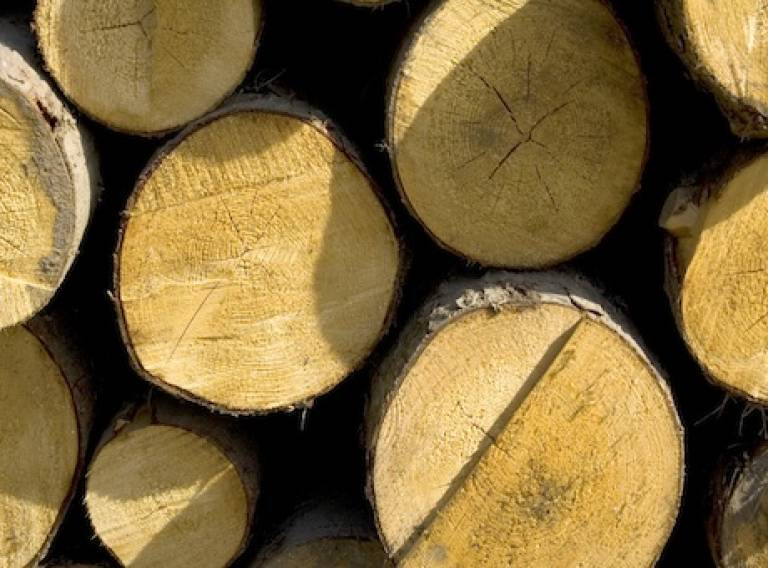 Wood logs (c) sxc