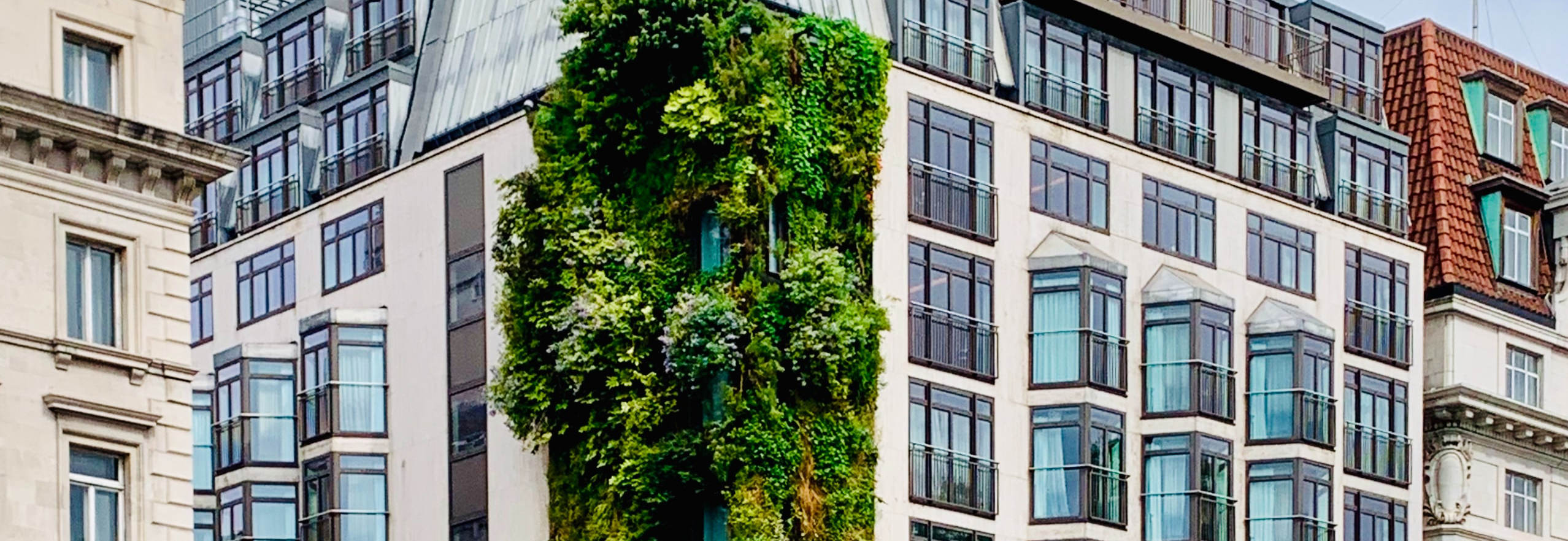 Green wall installation on the side of a building