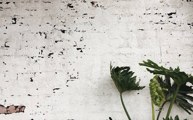 plant in front of a water damaged wall