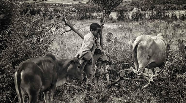 Ethiopia Control of Bovine Tuberculosis Strategies