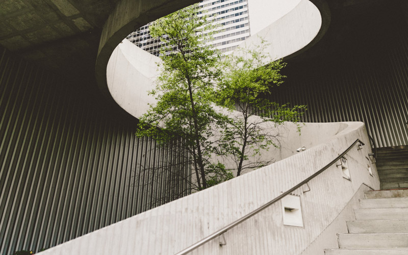 A tree surrounded by concrete architectural structure and staircase