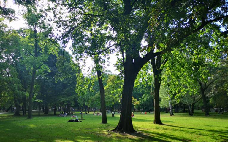 Green parkland