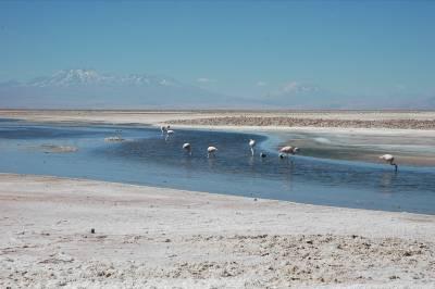 The Salar de Atacama, a salt flat in northern Chile