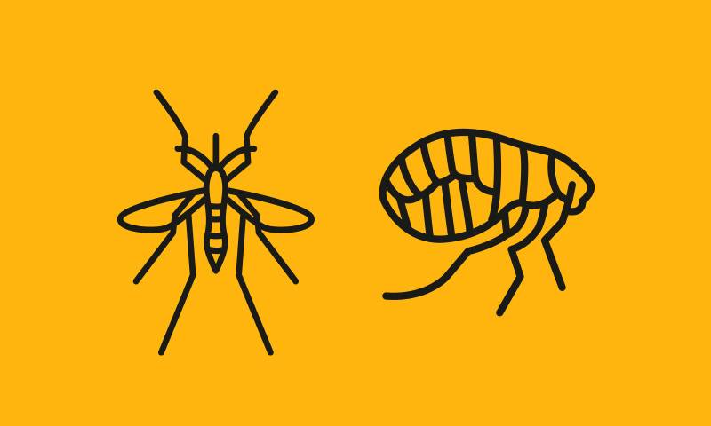 A graphically designed image of a mosquitto