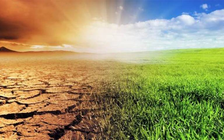 drought and green grass