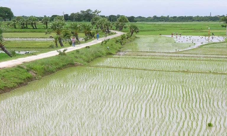 ground_water_irrigation_in_dry_season_bangladesh_c_willy_burgess_ucl_800x.jpg