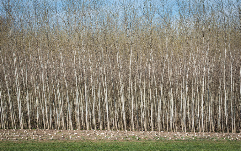 photo of a row of trees