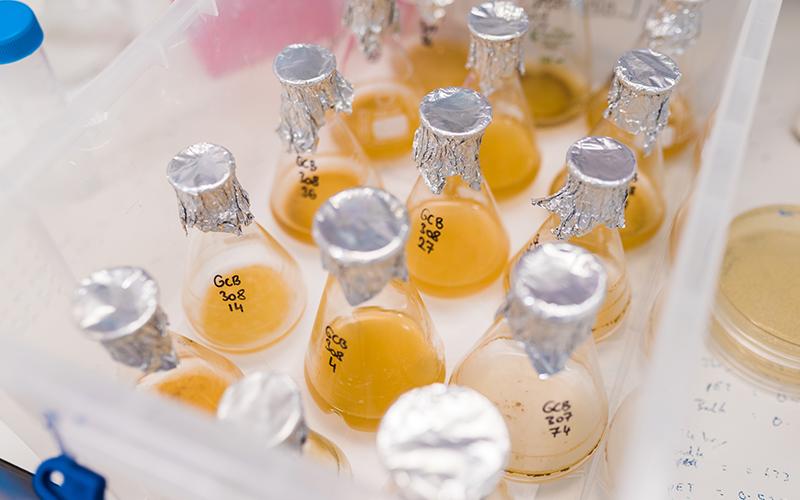 Laboratory flasks of liquid