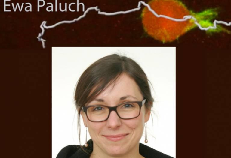 Professor Ewa Paluch BSCB Hooke Medal Winner 2017