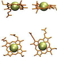 Electron/proton transfer and small-molecule transport in proteins