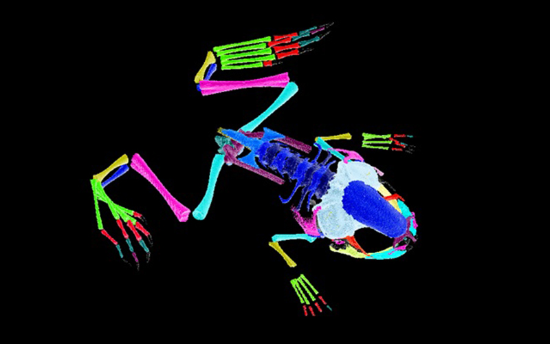 Cell and Developmental Biology Centres and Consortia Image Frog