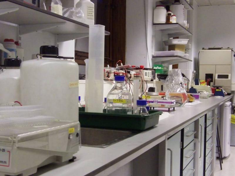Molecular and Cultural Evolution Lab