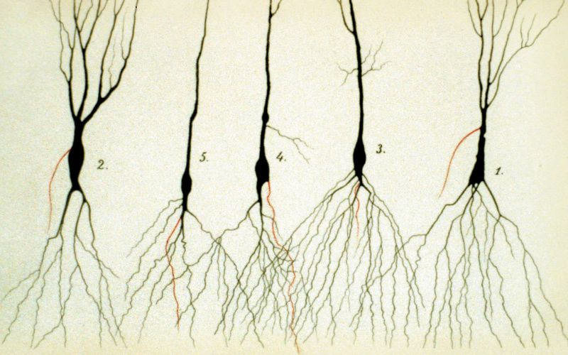 Neurons sketch
