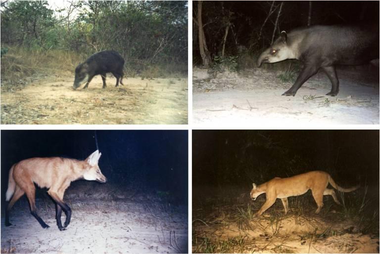 Mammal species recorded at Veredas do Peruaçu State Park