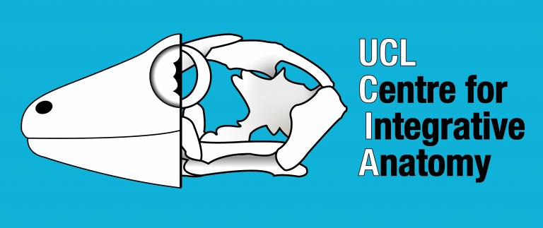 UCL Centre for Integrative Anatomy Logo image