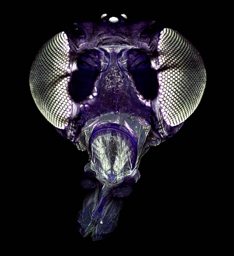 image of a fly head