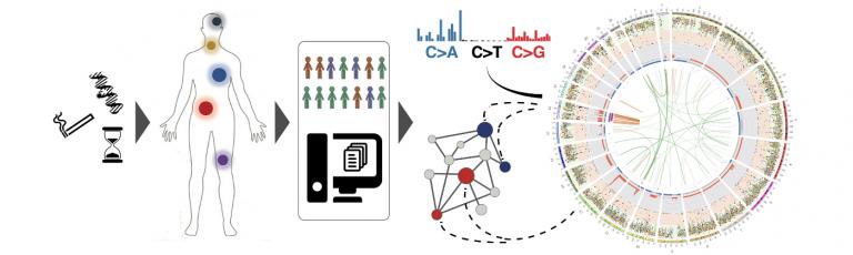 secrier group genetics human disease image final for content
