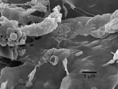 Giant Mine As-contaminated biofilm