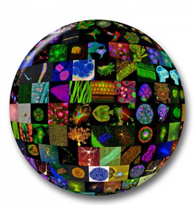 Confocal Sphere Logo